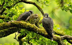 animals, birds, twigs
