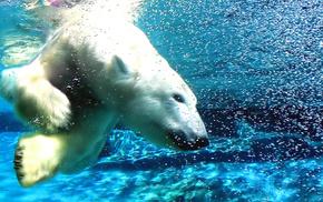 белый медведь, животные, вода