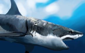 underwater, art, animals, shark
