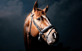 animals, horse, black background