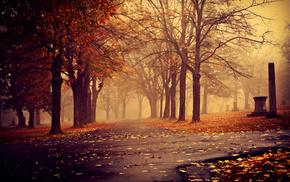 mist, cities, park, autumn, leaves