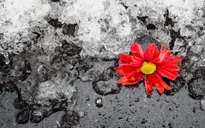 ice, winter, flower, stunner