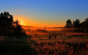 Sun, dawn, forest, mist, nature