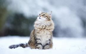 winter, animals, snow