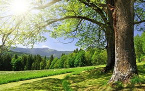 summer, greenery, Sun, forest, trees