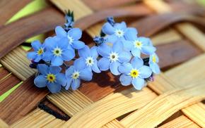 background, flowers, summer