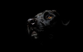 eyes, dog, black, animals, background