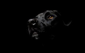 eyes, dog, black, animals, background