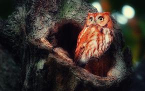 animals, tree, bird, owl, forest