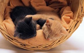 kittens, animals, basket