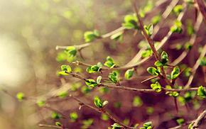 greenery, leaves, twigs, macro, spring
