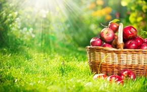 nature, fruits, basket, apples