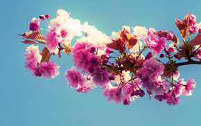 bloom, sky, spring, branch, flowers
