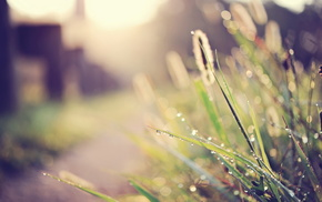 street, macro, grass, light