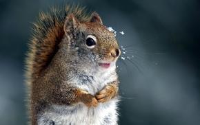 animals, nature, winter, squirrel