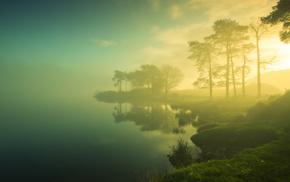 природа, туман, берег, утро, деревья, трава