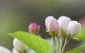 bloom, green, spring, branch, leaf