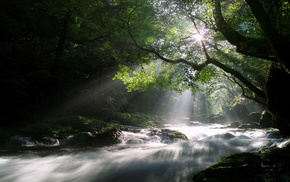 rays, nature, morning, Sun, forest