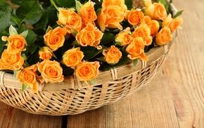 petals, rose, roses, лепестки, корзины, Flowers