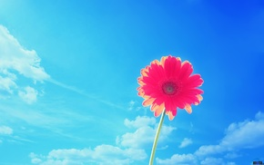 flower, sky, beautiful, clouds, background