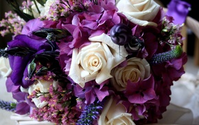 purple, color, flower, flowers, roses
