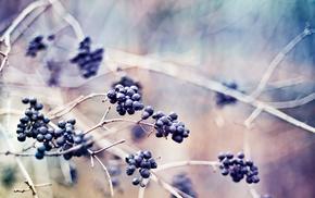 macro, twigs, berries, nature, plants