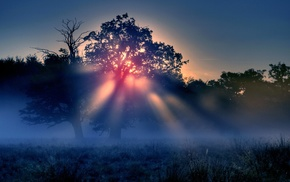 night, forest, trees, nature, mist