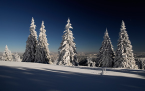 snow, nature, winter, Christmas tree, forest
