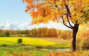 leaves, sky, autumn