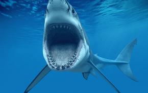 animals, ocean, shark