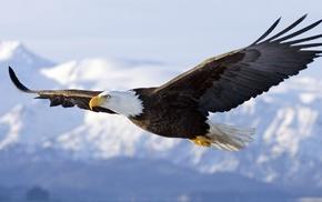 art, bird, animals, sky, eagle