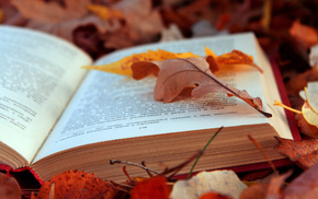 book, foliage, autumn, text, stunner