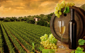bottle, wine, leaves, delicious, grapes