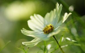 flowers, macro, flower, white