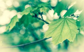 macro, spring, foliage