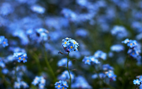 blue, bokeh, yellow, colors, flowers