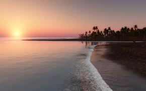 sunset, palm trees, tropics, ocean, nature