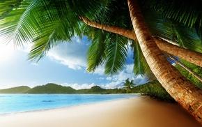 palm trees, sand, ocean, summer, beach