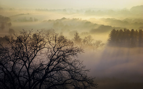 Canada, morning, trees, mist, nature