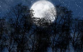 moon, forest, night, stunner