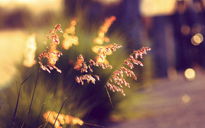 macro, sunset, grass, summer, bokeh