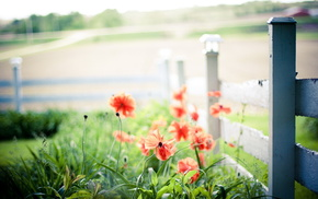 fence, flowers, macro, poppies, light
