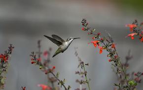 fly, flowers, animals, bird