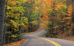 nature, autumn, trees, leaves, road
