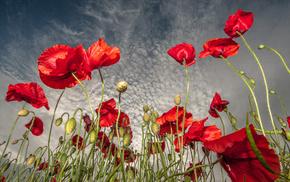 небо, цветы, поле, маки, облака, красные