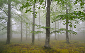 trees, foliage, forest, nature, mist