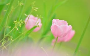 plants, greenery, pink, flower, flowers