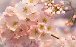 macro, flowers, tree, bloom