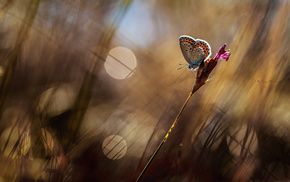 grass, animals, highlights, butterfly, macro