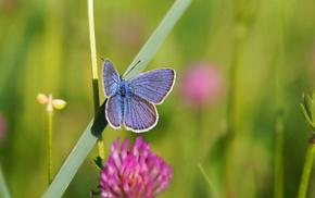 grass, butterfly, summer, macro